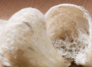 Sarang walet