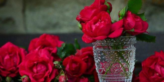 Manfaat Bunga Mawar Bagi Kecantikan dan Kesehatan