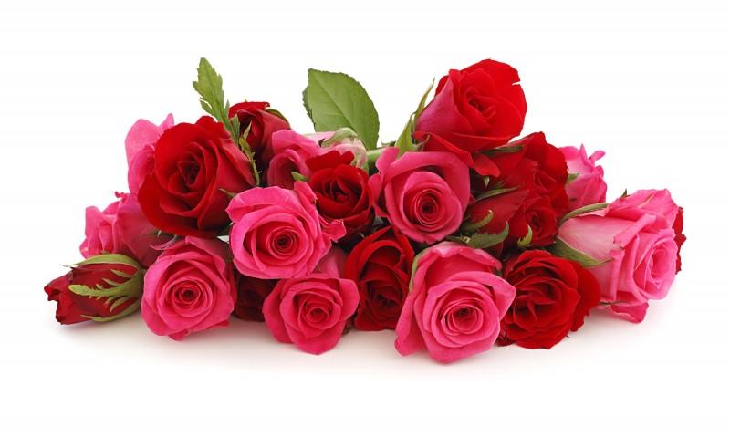 Manfaat Bunga Mawar bagi Kesehatan dan Kecantikan