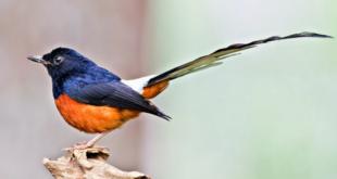 Jenis Burung Termahal yang Ada di Indonesia dan Harganya