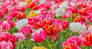 Macam Macam Bunga Terindah dari Seluruh Penjuru Dunia