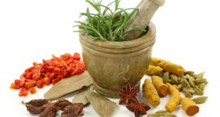 Manfaat Tanaman Obat Keluarga untuk Kesehatan Tubuh