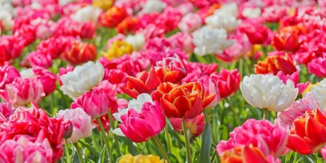 Macam Macam Bunga Terindah dari Seluruh Penjuru Dunia ...