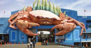Serunya Wisata Bahari Lamongan Yang Wajib Dikunjungi